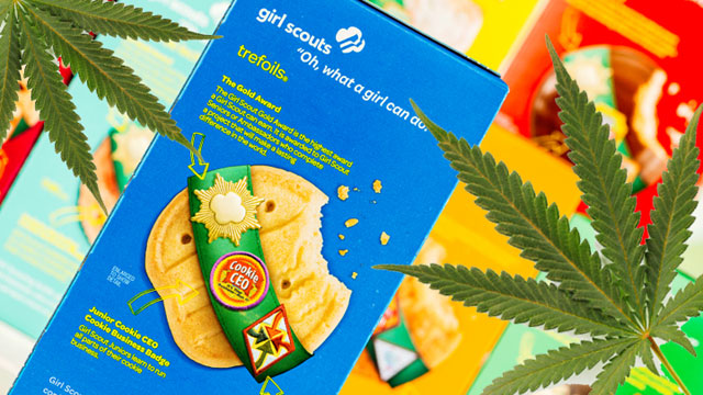 Girl Scout Cookies Marijuana Selling for $5,000 a Pound
